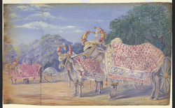 Decorated oxen drawing state gun carriages, Baroda